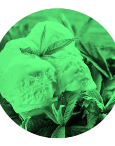 Nilla Mint by Simply Vapour